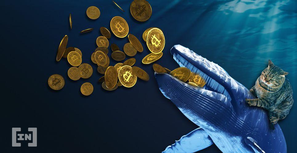 baleia bitcoin